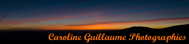 http://www.carolineguillaumephotographies.fr/